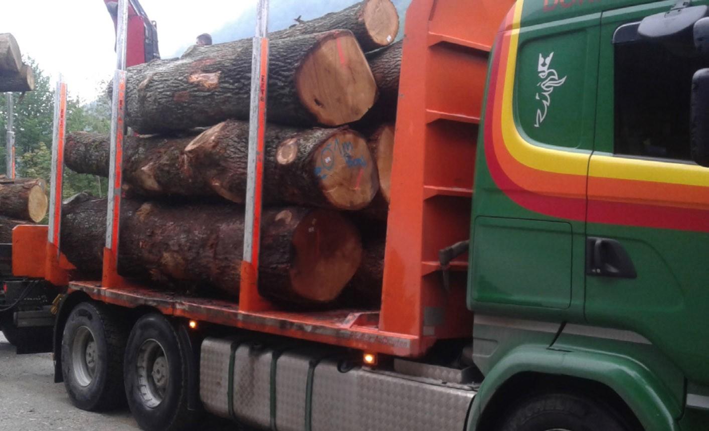 Stolz auf Eichenholz